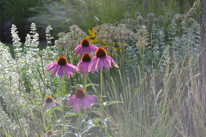 Madison Landscape Design
