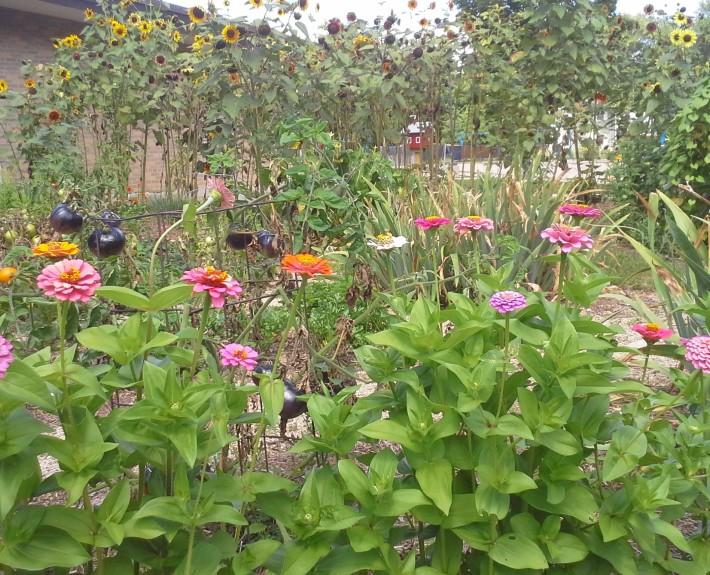 Elvehjem School Garden Summer 2014