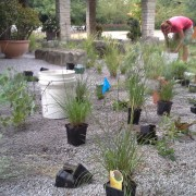 Native gravel gardening
