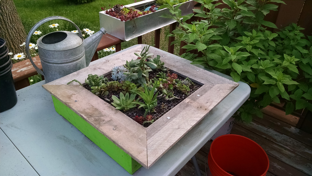 How To Make A Vertical Succulent Garden In A Picture Frame