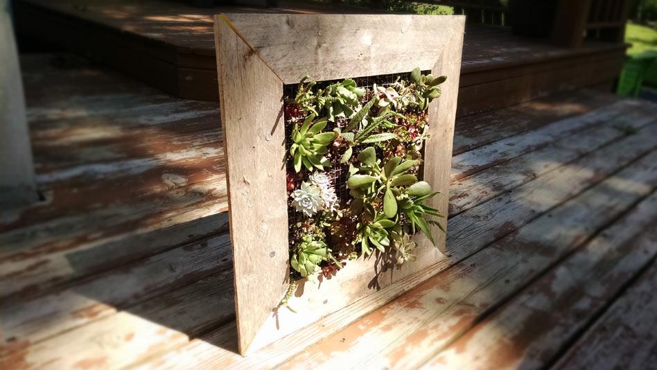Vertical Succulent Garden Sprout Landscape Garden Design